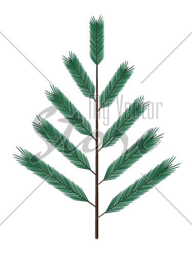 vector fir twig