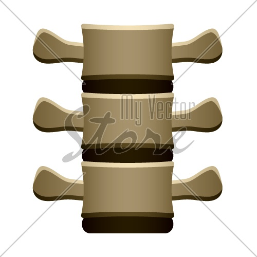 vector human spine vertebrae front view