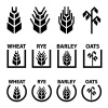 vector wheat rye barley oat cereal spike ears symbols